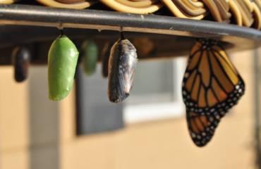 Changer de vie avec le soin chamanique
